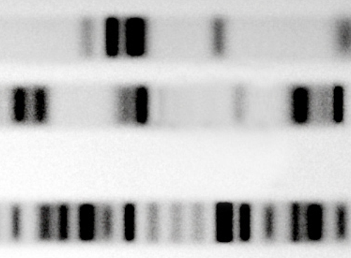 Genetic Code Pic Blank 2 small